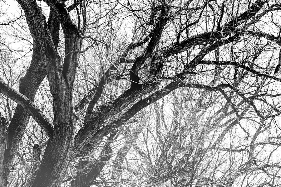 Timber Tentacles Photograph