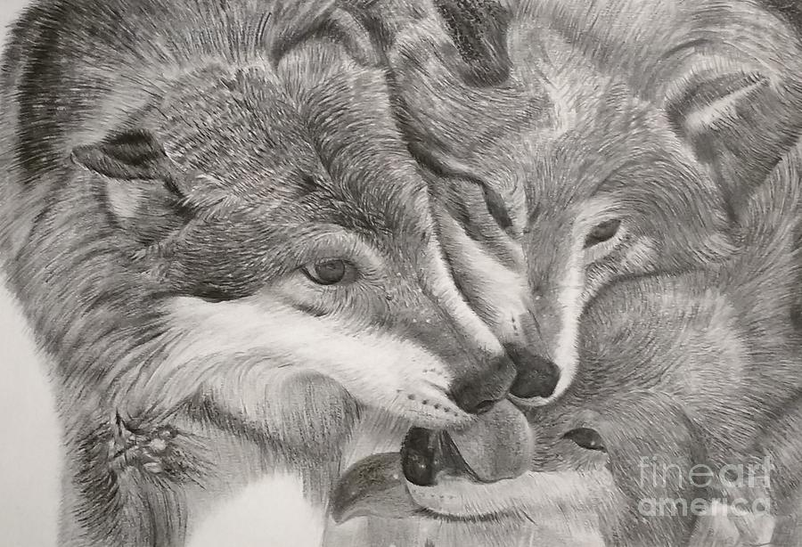 Timberwolves Drawing By Mark Bloomer