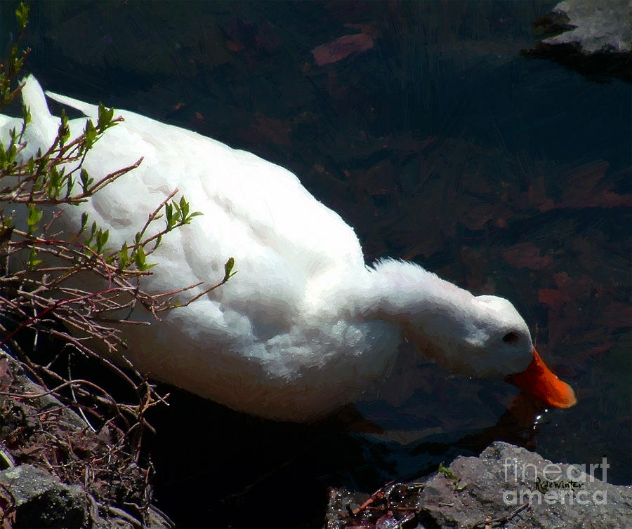 Duck Painting - Time For A Drink by RC DeWinter