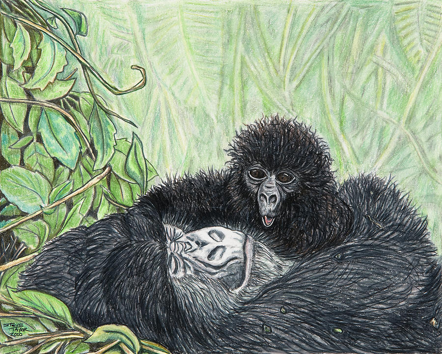 Gorilla Drawing - Time To Get Up by Stephen Taylor