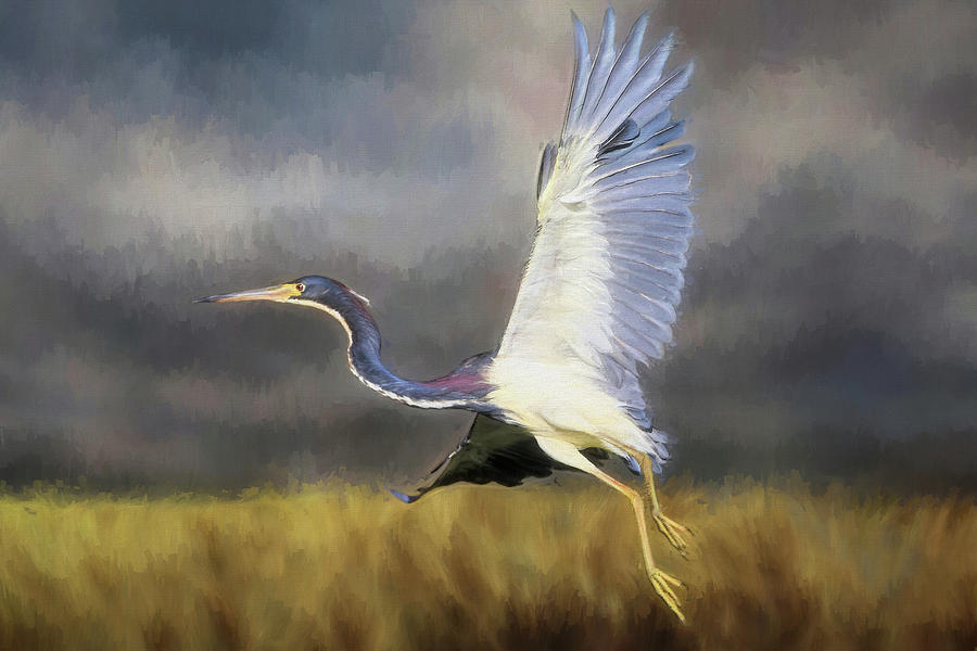 Tri-colored Heron Photograph - Time To Go by Donna Kennedy