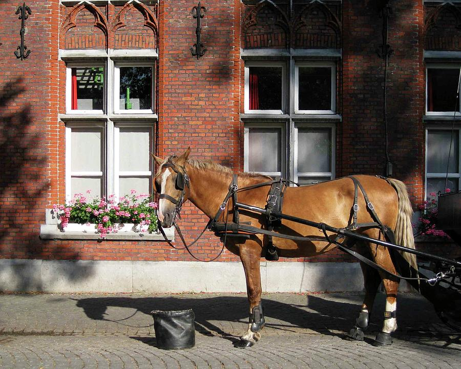 Horse Photograph - Time To Rest by David L Griffin