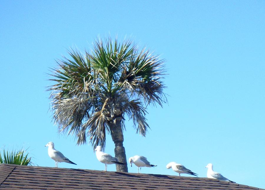 Sea Gulls Photograph - Time To Rest by Francis Roberts ll