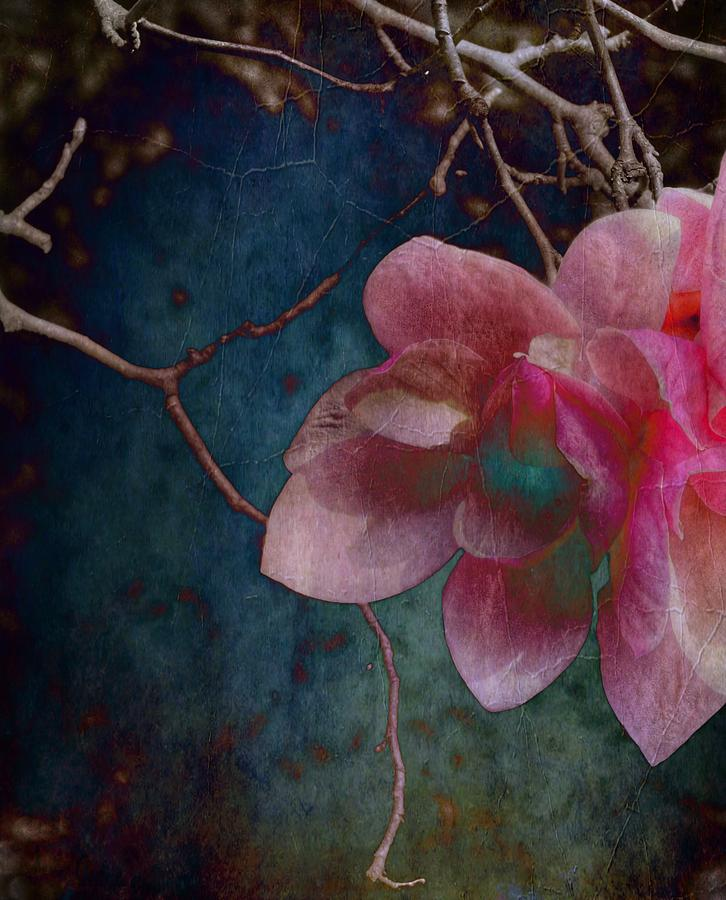 Timeless - Magnolia Blossoms  by Marianna Mills