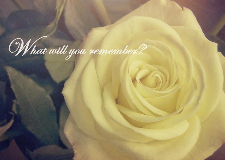 Rose Photograph - Timeless Quote by JAMART Photography