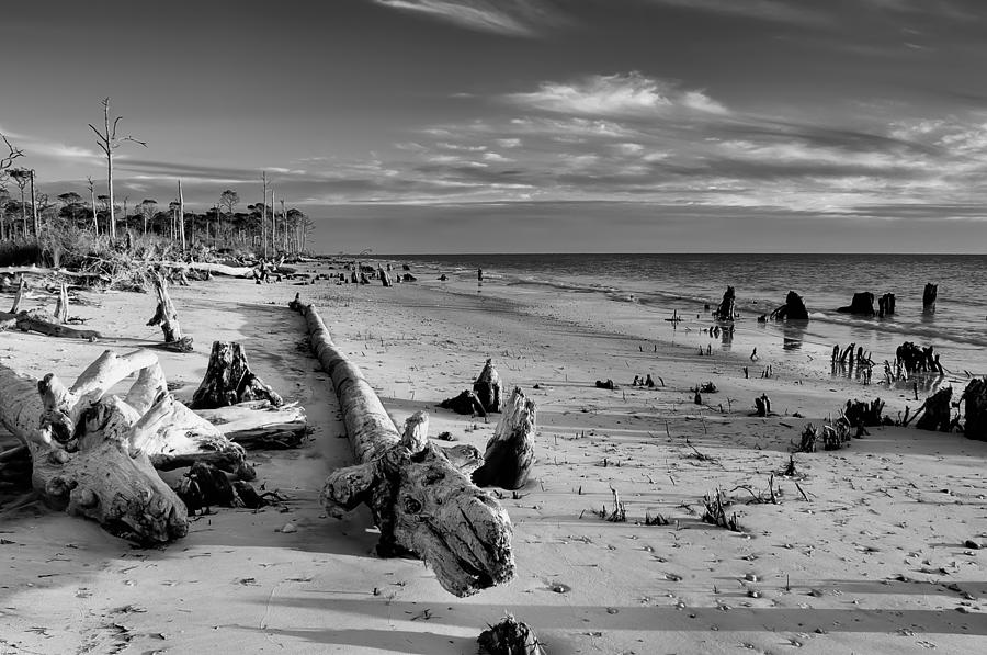 Driftwood Photograph - Timess Florida Coast  by Rich Leighton