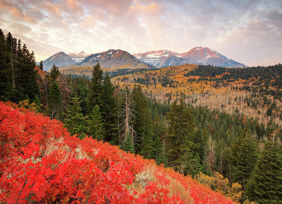 October Photograph - Timp With Red Oak by Johnny Adolphson