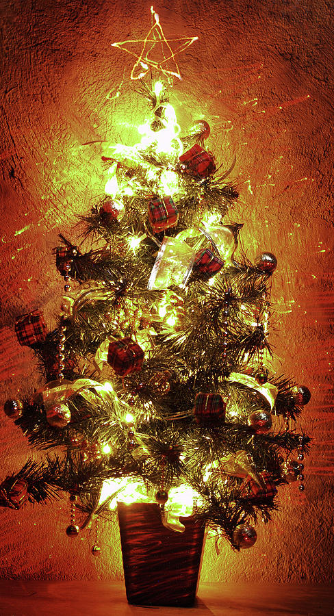 christmas tree photograph tiny christmas tree by cesar caina