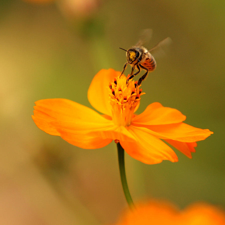 Nature Photograph - Tiny Dancer by Marion Cullen
