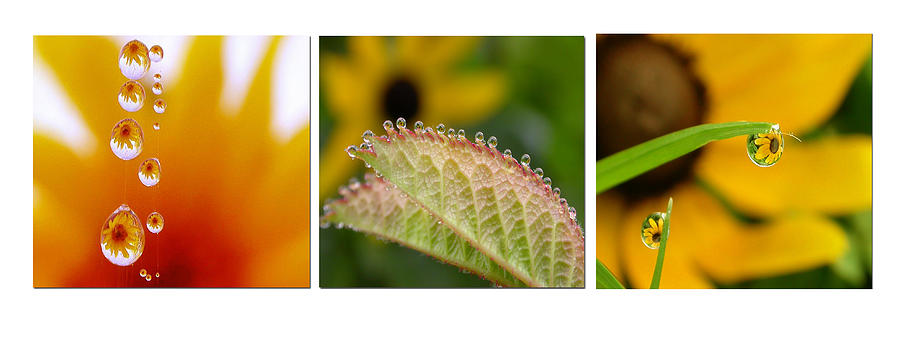 Dew Photograph - Tiny Miracles by Linda  Murphy