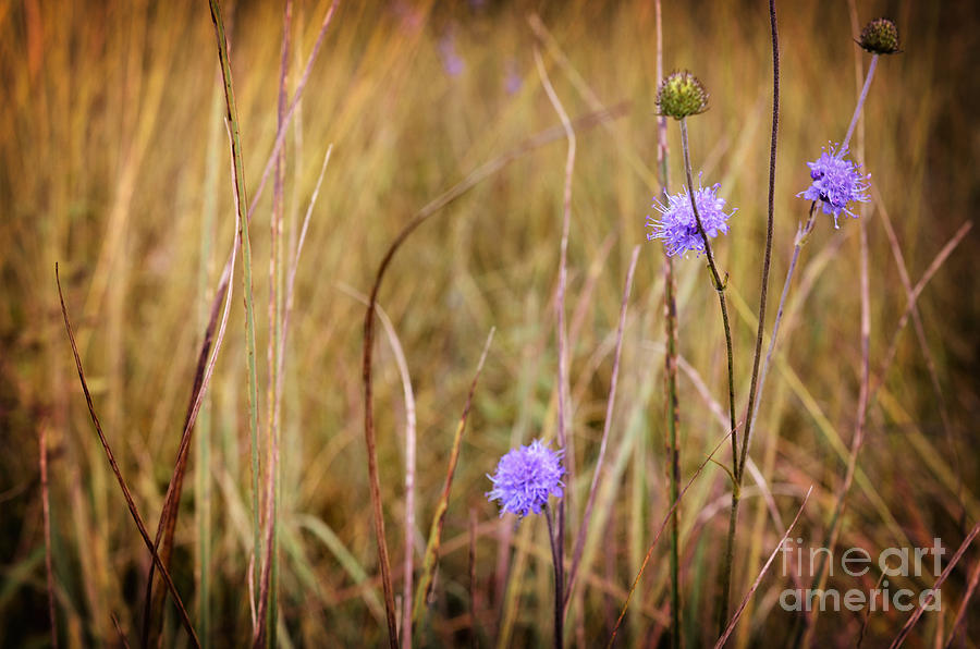 Tiny Purple Flowers In An Autumn Field Photograph
