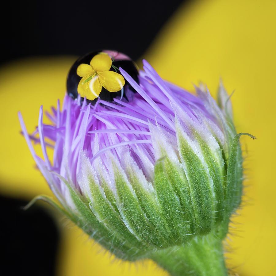 Close Up Photograph - Tiny Reflection by Tracy Munson