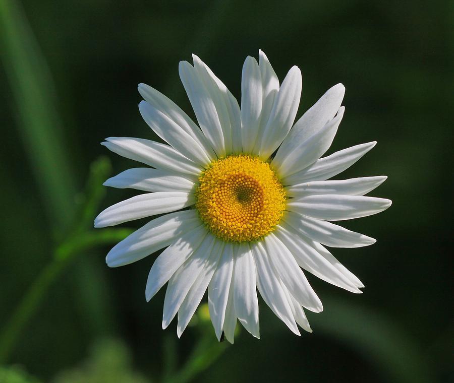 W Photograph - Tiny Sunshine by Robert Pearson