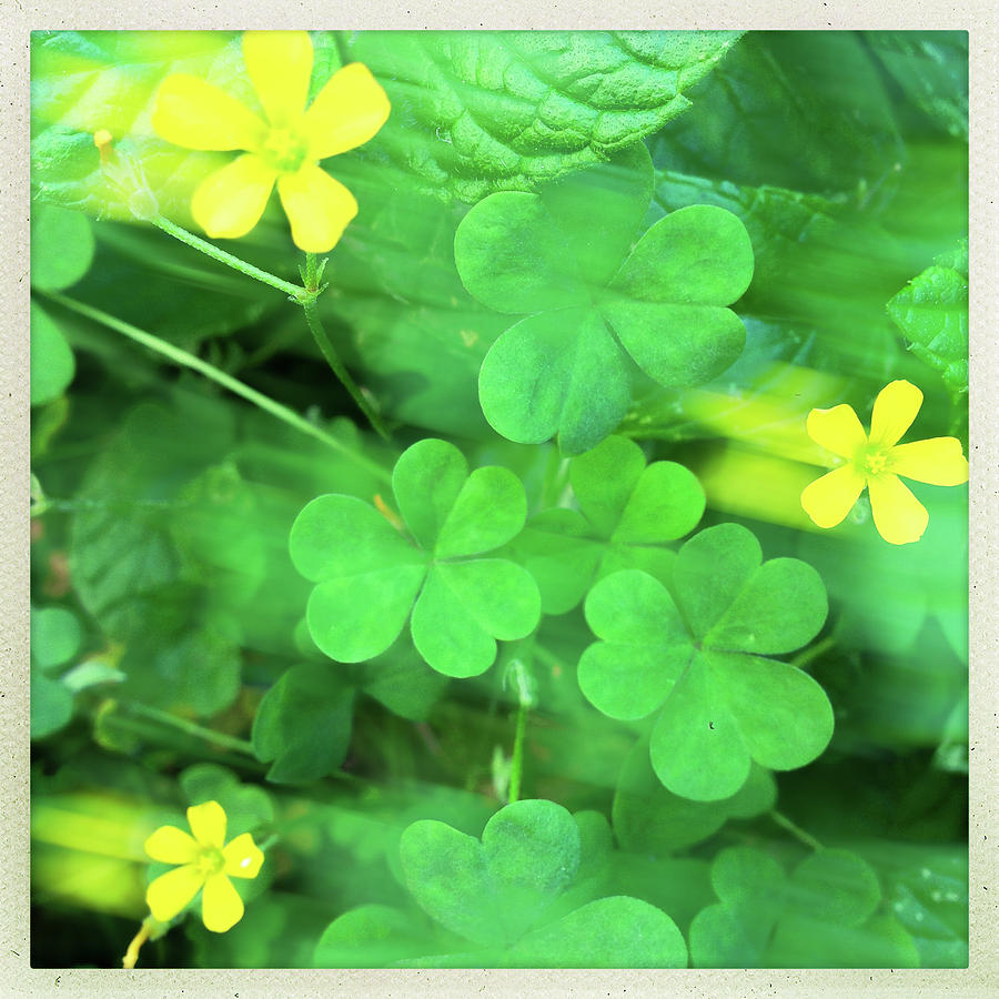 Tiny Yellow Flowers In Motion Photograph By Michael Klusek