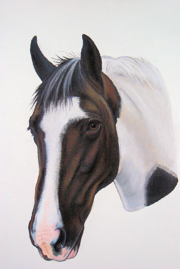 Horse Pastel - Tippy by Lucy Deane