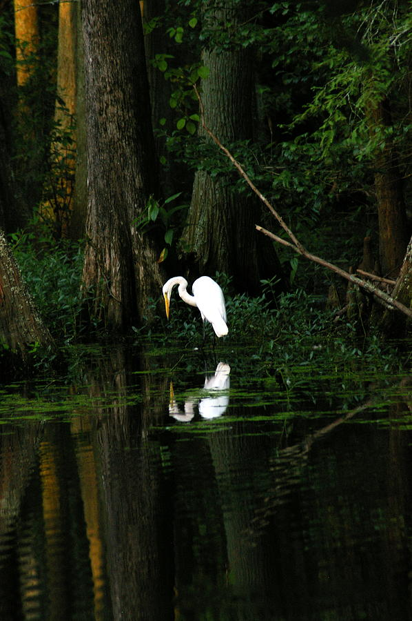 Crane Photograph - Tiptoe 2 by Don Prioleau