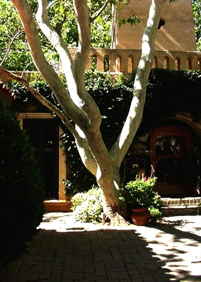 Landscape Photograph - Tlaquepaque Sycamore by Fred Wilson