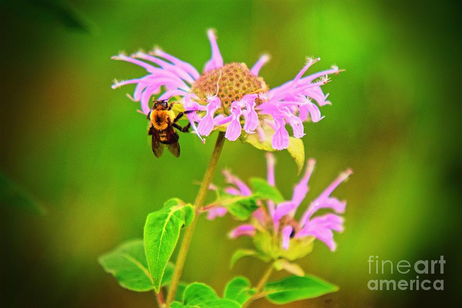 To Bee Hanging On by Becky Kurth
