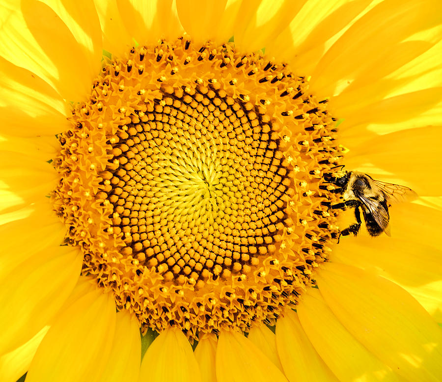 To Bee Or Not To Bee Photograph