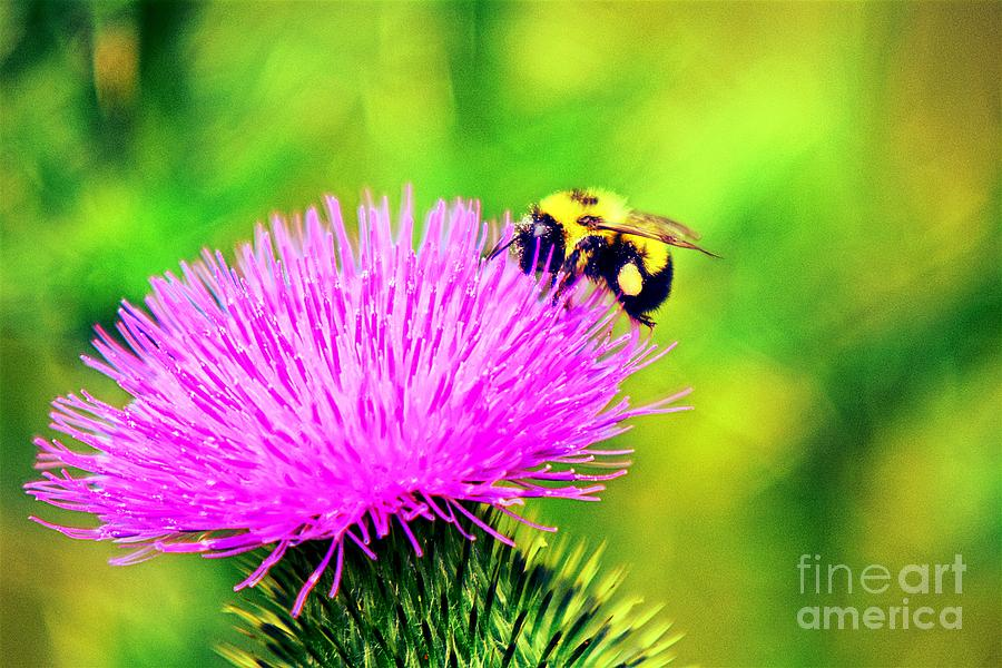 To Bee Together Again by Becky Kurth