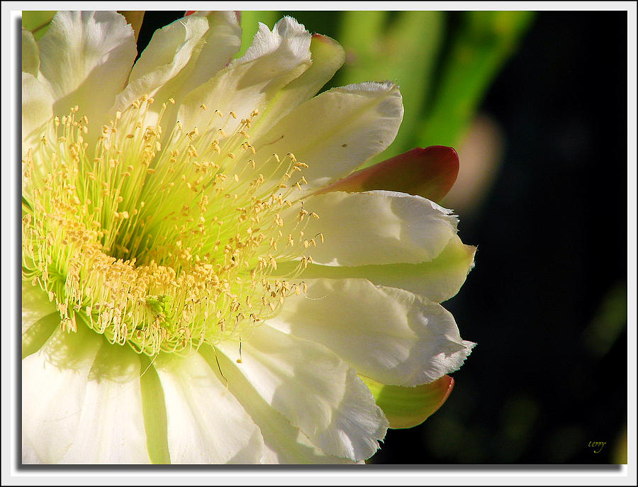 Beautiful Flowers Photograph - To God Be The Glory by Terry Temple
