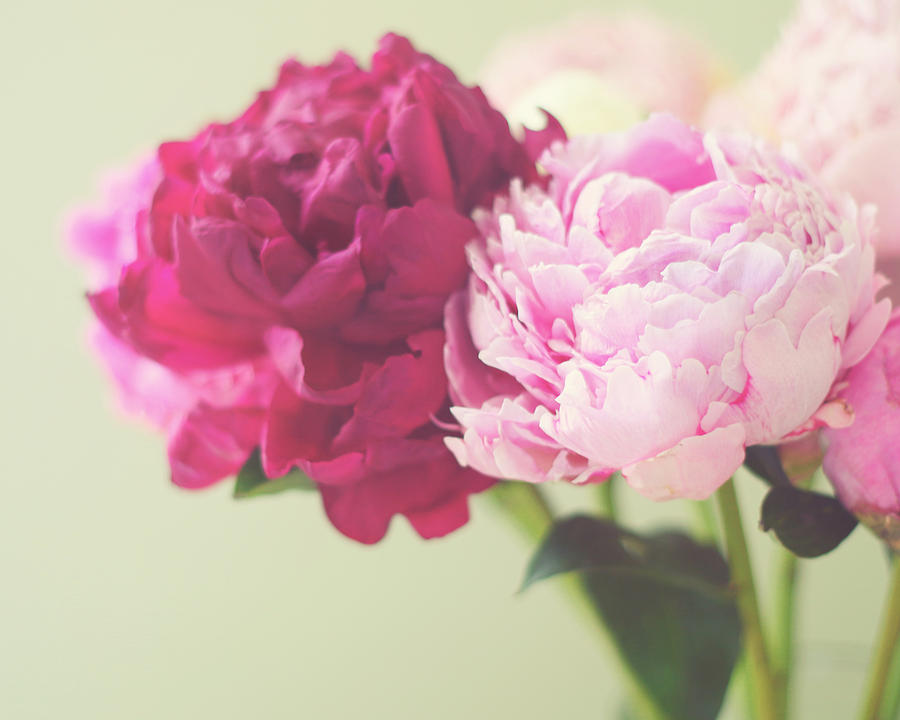 Peonies Photograph - To Have And To Hold by Amy Tyler