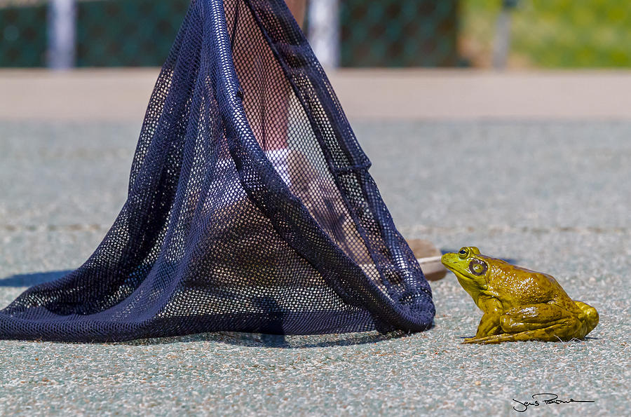 Bullfrog Photograph - To Hop Or Not To Hop... by Jens Peermann