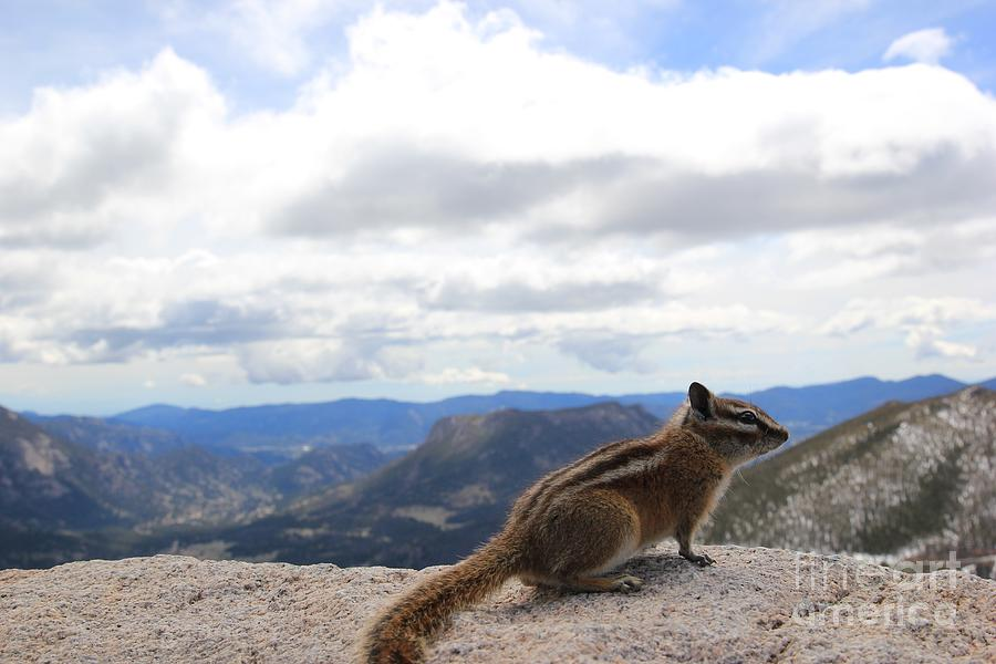 Chipmunk Photograph - To Infinity And Beyond by Stephanie Woerndle