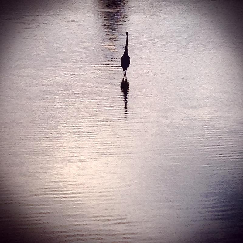 Water Photograph - To Stand Alone by Sharon Green