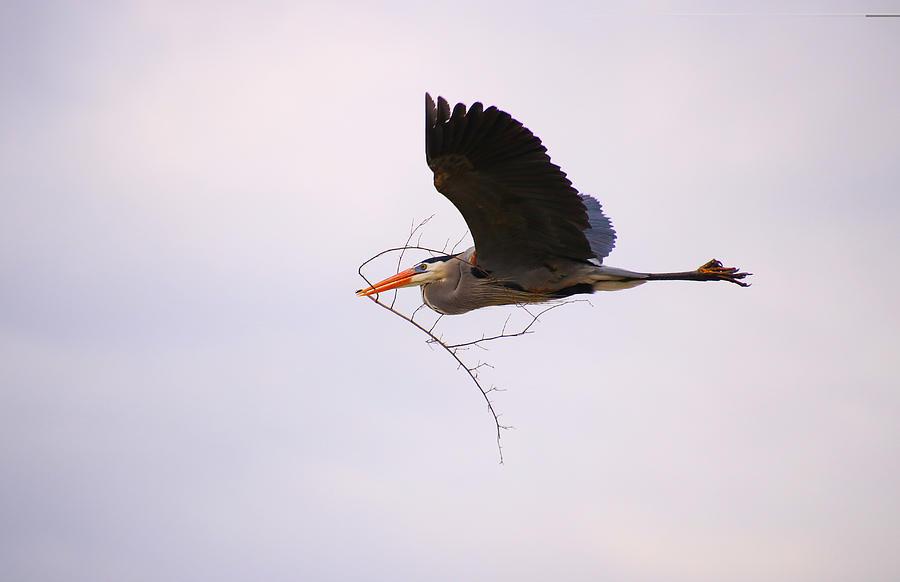 Heron Photograph - To The Nest by Tony Umana