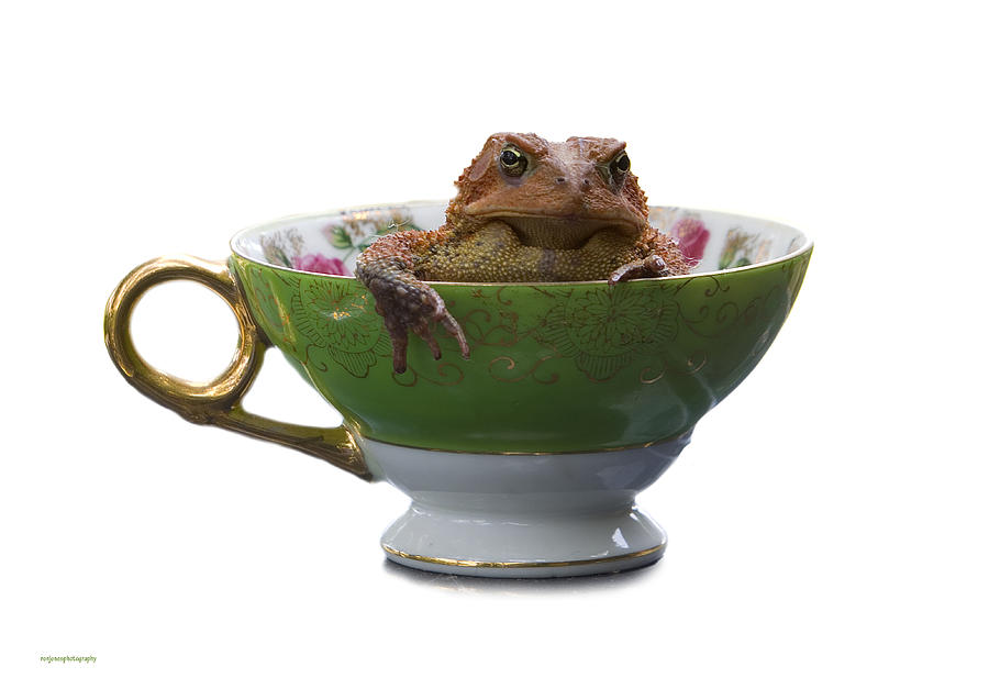 Ron Jones Photograph - Toad In A Teacup by Ron Jones