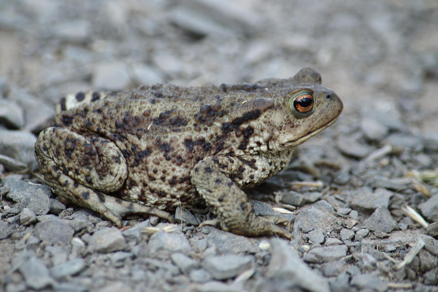 Toad In My Path by Adrian Wale