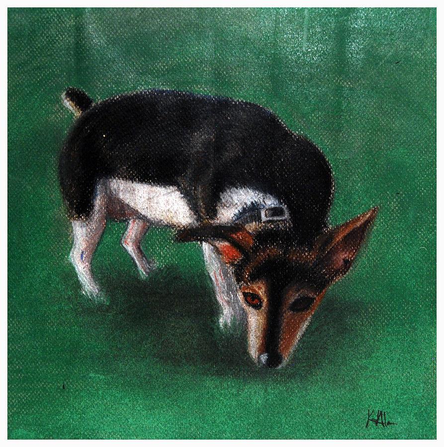 Tobi The Rat Terrier Pastel by Karen Alarcon