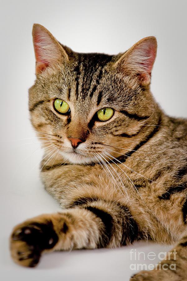 Cat Photograph - Toby 2 by Dean Birinyi