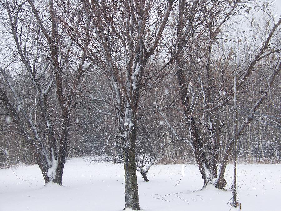 Snow Photograph - Today - November 25 - Photograph by Jackie Mueller-Jones