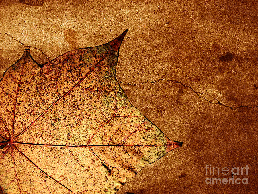Autumn Photograph - Today Everything Changes by Dana DiPasquale