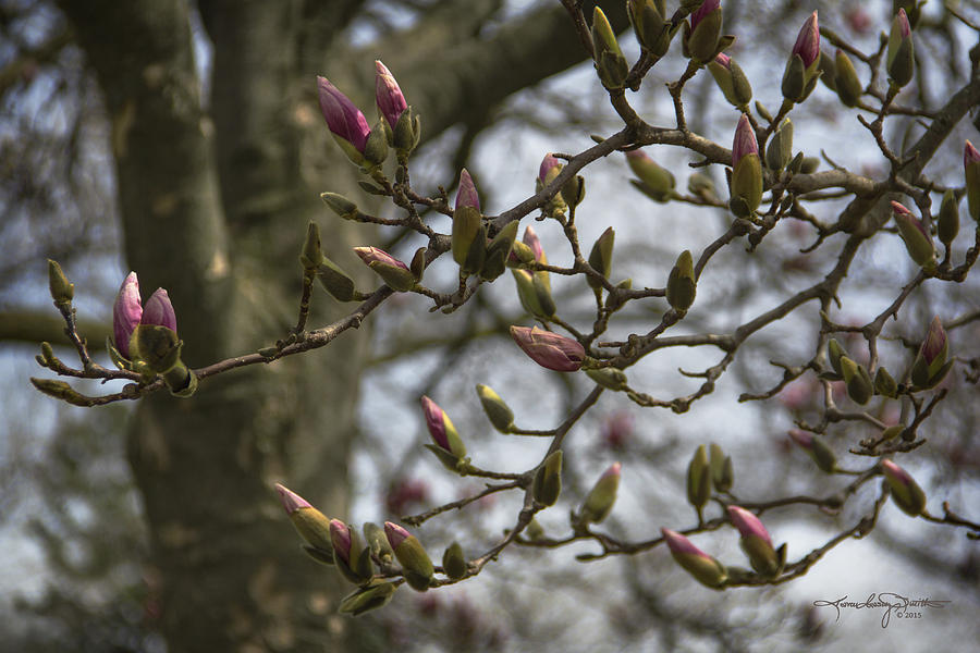 Magnolia Photograph - Today The World Is New Again by Karen Casey-Smith