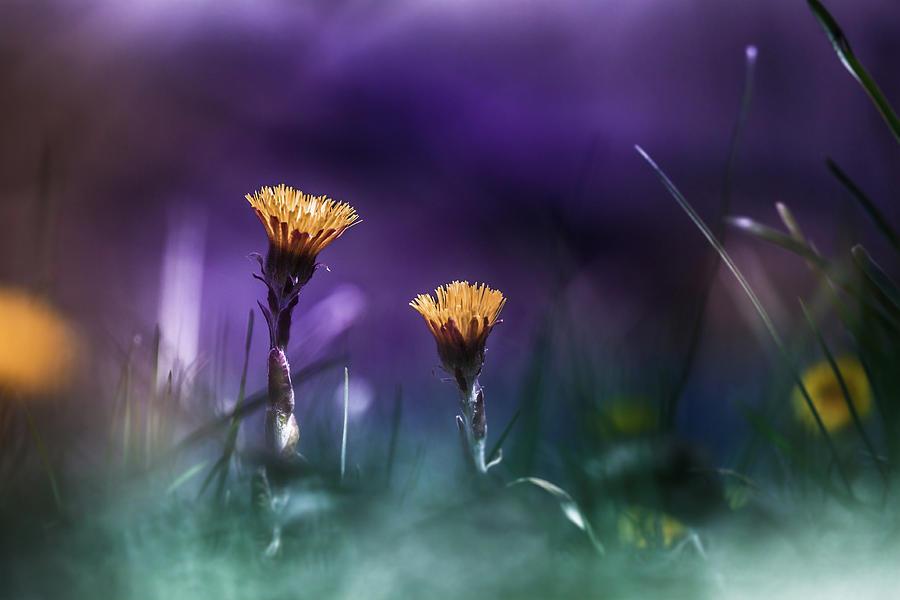 Purple Photograph - Together by Bulik Elena