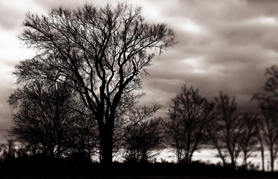 Trees Photograph - Together We Stand by Trisha Scrivner