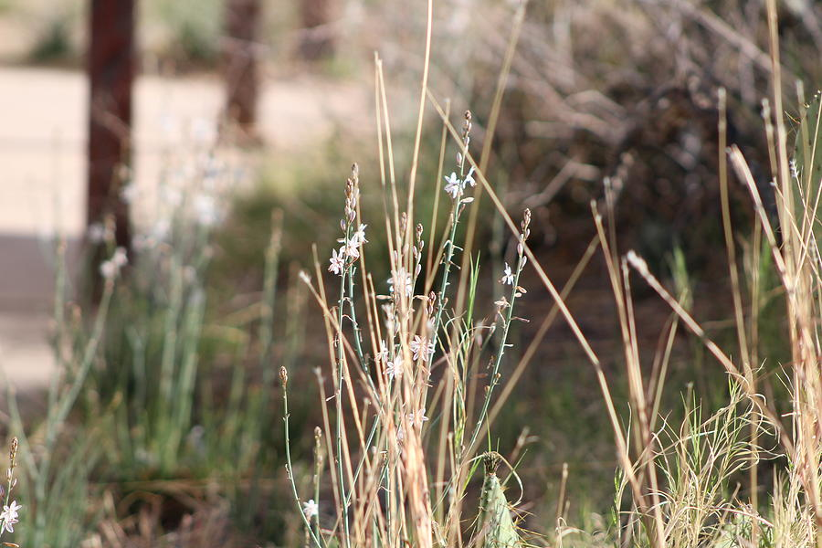 Wild Grass Photograph - Tombstone Wildflowers and Grass by Colleen Cornelius