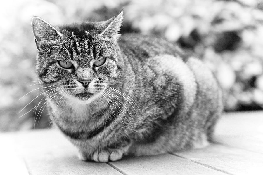 Tomcat Photograph - Tomcat by Frank Tschakert