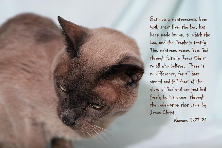 Scripture Photograph - Tonkinese Cat Romans 3 V 21-24 by Linda Phelps