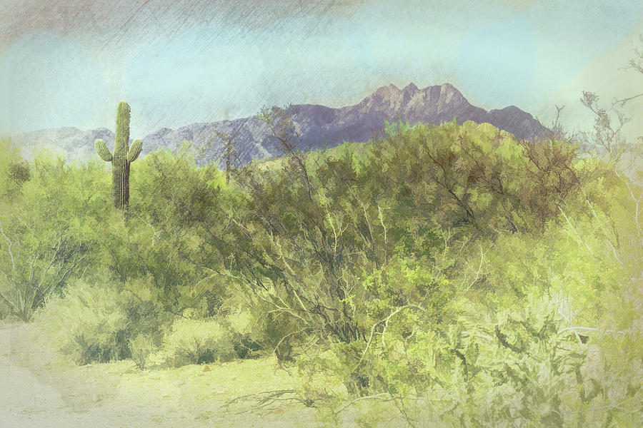 Tonto National Forest by Grace Dillon