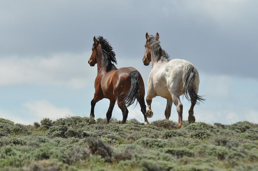 Wild Horses Photograph - Too Beautiful by Frank Madia