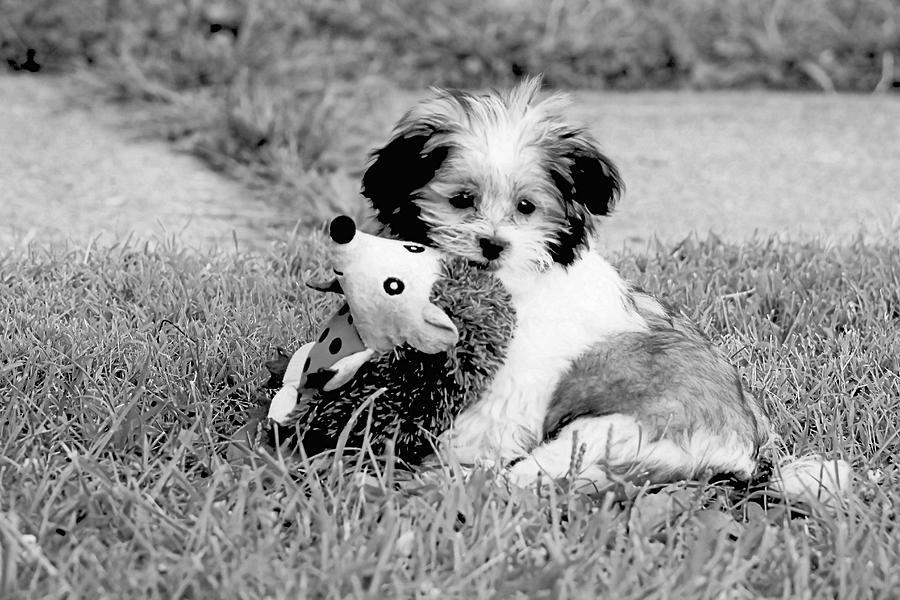 Too Cute Photograph