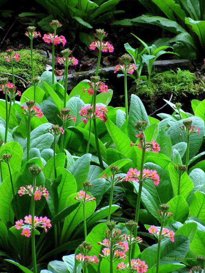 Flowers Photograph - Too Pretty by Deborah  Crew-Johnson