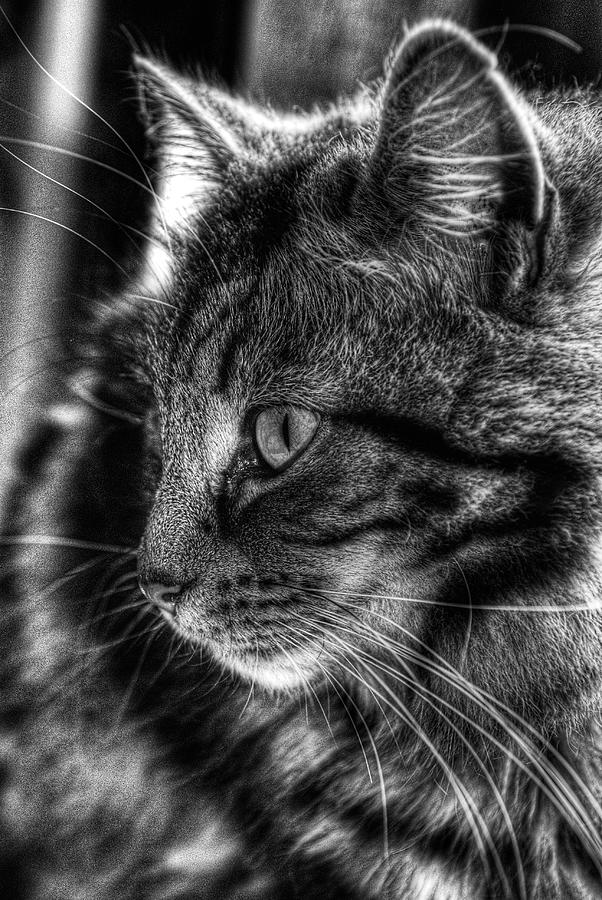 Cat Photograph - Toots2 by Fraser Davidson