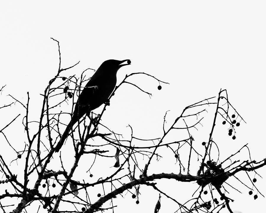 Nature Photograph - Top Bird by Peg Urban