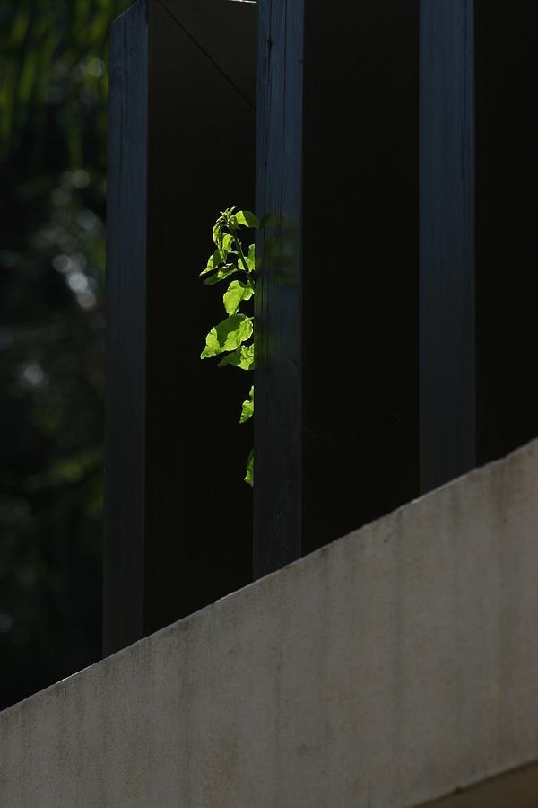 Pictorial Photograph - Top Light by Deepak Pawar
