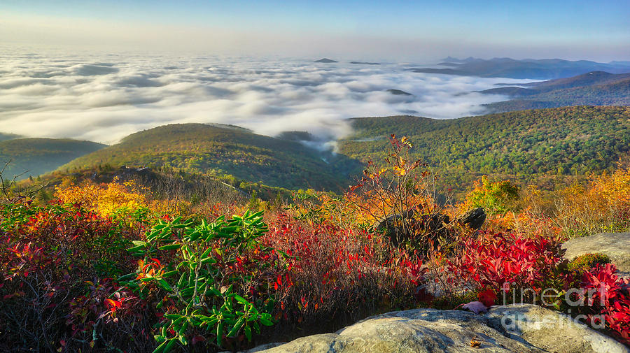 Top of the Morning at Rough Ridge on the Blue Ridge Parkway by Daniel Brinneman